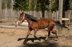 Cheval de Sorell Photo stock