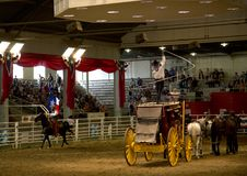 Cheval de tour de cowboy avec le drapeau à l'exposition solitaire de ruée d'étoile Photos libres de droits