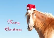 Cheval de trait belge souhaitant le Joyeux Noël image libre de droits