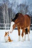 Cheval de trait et chien de border collie de rouge Images libres de droits