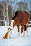Cheval de trait et chien de border collie de rouge Image stock