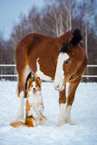 Cheval de trait et chien de border collie de rouge Photo stock