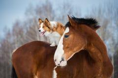 Cheval de trait et chien de border collie de rouge dans l'horaire d'hiver Photographie stock libre de droits
