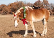Cheval de trait s'usant une guirlande de Noël Photos libres de droits