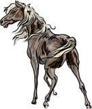Cheval debout illustration stock