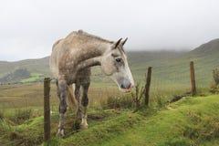 Cheval derrière une frontière de sécurité Photographie stock