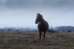 Cheval en brouillard, photo stock