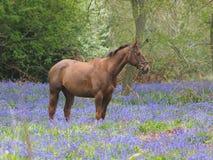 Cheval en fleurs Images stock