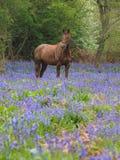 Cheval en fleurs Photos libres de droits