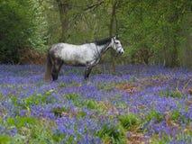 Cheval en fleurs Image libre de droits