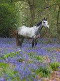 Cheval en fleurs Images libres de droits
