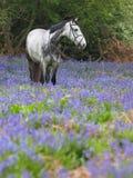 Cheval en fleurs Photo libre de droits