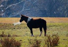 Cheval en hiver Photo libre de droits