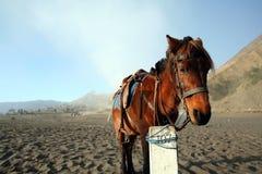 Cheval en Indonésie photo stock