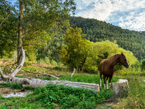 Cheval en nature Photographie stock libre de droits