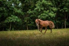 Cheval en nature Photos stock