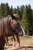 Cheval en nature sauvage Images stock