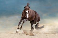 Cheval en sable photos stock