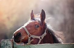 Cheval en soleil Image libre de droits