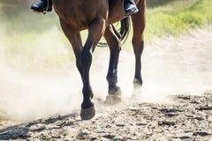 Cheval en Sunny Dust photographie stock libre de droits