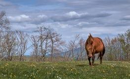 Cheval enceinte de montagne sauvage photos stock