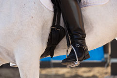 Cheval espagnol Photographie stock