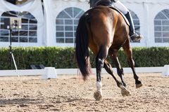 Cheval espagnol Photographie stock libre de droits