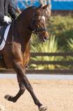 Cheval espagnol Photo stock