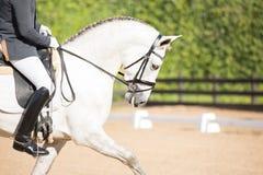 Cheval espagnol Image libre de droits