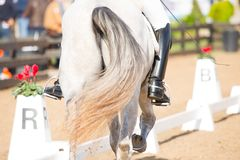 Cheval espagnol Photo libre de droits