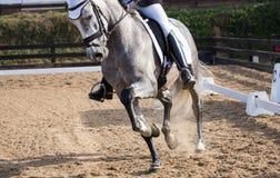 Cheval espagnol Photos stock