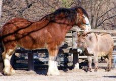 Cheval et âne Photographie stock libre de droits