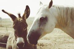 Cheval et âne Amérique rurale Image libre de droits