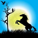 Cheval et aigles dans le domaine d'herbe sous la pleine lune Photos stock