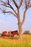 Cheval et arbre Photographie stock
