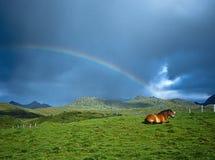 Cheval et arc-en-ciel, Lofoten Norvège image libre de droits