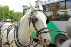 Cheval et autobus Photos libres de droits