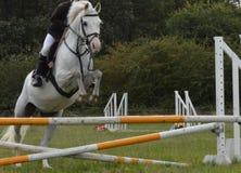 Cheval et cavalier sautant un obstacle photo libre de droits