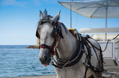Cheval et chariot Image stock