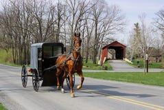 Cheval et chariot amish Photo stock