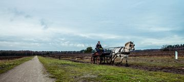 Cheval et chariot en automne Veluwe les Pays-Bas photographie stock