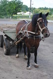 Cheval et chariot se tenant sur la route Photo stock
