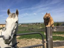 Cheval et chat Images stock