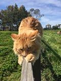 Cheval et chat toilettant chacun Photo libre de droits