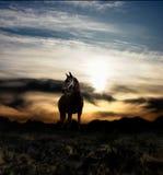 Cheval et coucher du soleil Photo stock
