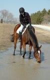 Cheval et curseur Photo libre de droits