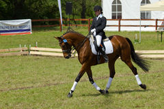Cheval et curseur de Dressage Images stock
