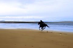 Cheval et curseur galopant le long de la côte Images libres de droits