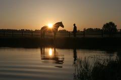 Cheval et homme Photographie stock libre de droits