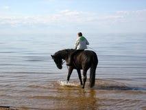 Cheval et mer. Photo libre de droits